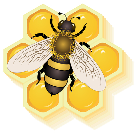 honeyed: working bee on honey cells vector eps 10
