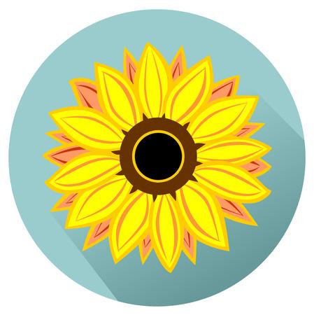 flower petals: Vector sunflower