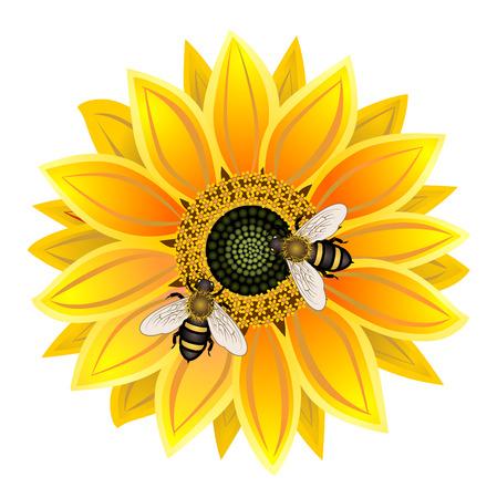 abeja: el girasol y la abeja