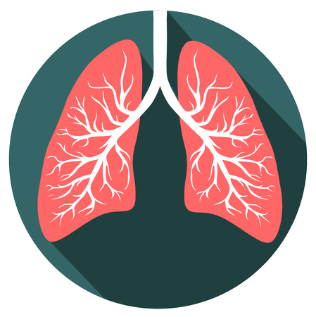 Human lungs organ isolated on white background representing the medical respiratory system to provide your oxygen to the body vector eps 10