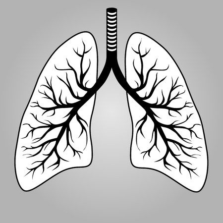 bronchioles: Human lungs organ illustration.