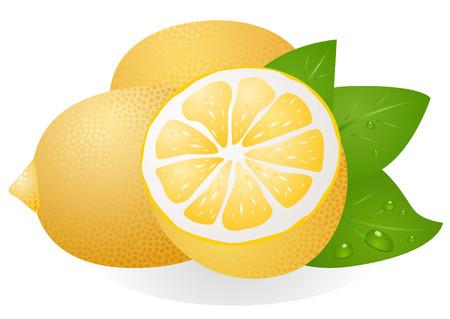 Fresh lemons with leaves Illustration