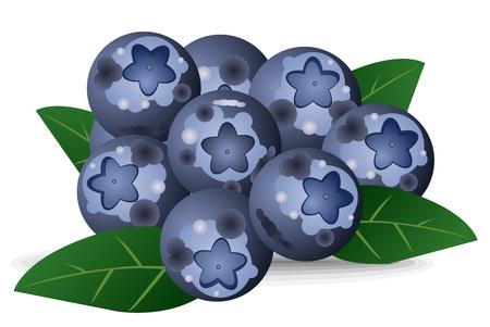 Fresh, natural garden blueberries vector eps 10 Illustration