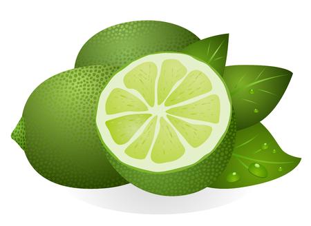 Lime aux feuilles isolées sur fond blanc