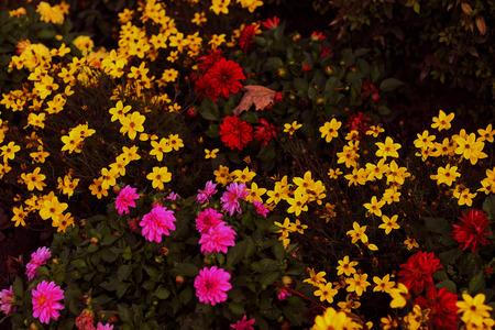 Fleurs d'automne colorés - Photo Banque d'images