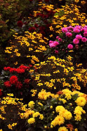 colorful autumn flowers stock photo Banque d'images