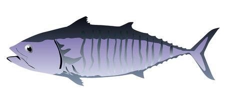 Tuna fish isolated vector eps 10