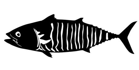 Tuna fish isolated vector