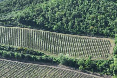 aereal: Aereal view of tuscan vineyard landscape background Stock Photo