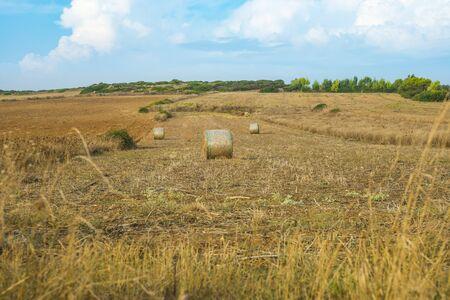 hay bales in plowed field of Sardinian island Standard-Bild