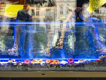 Thai foot massage aquarium in prague
