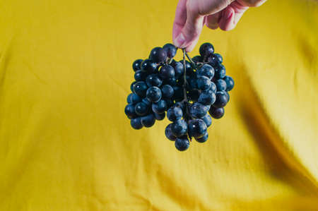 Large clusters of blue grapes on a yellow background