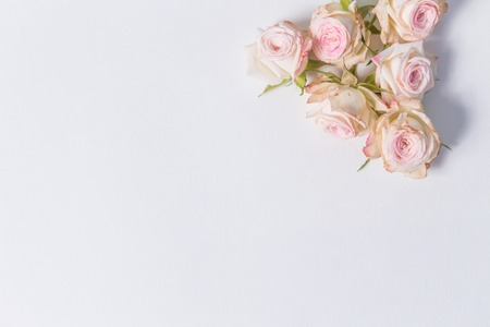 beautiful delicate flowers spray roses on a white background in the corner with place for label, close up, top view