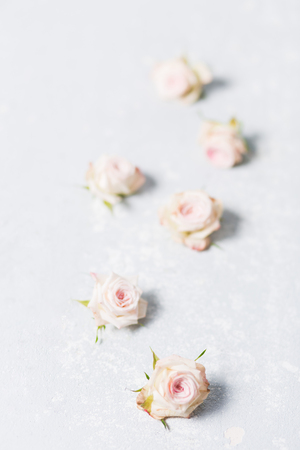beautiful spray roses, pink flowers vertically on a white variegated gray background, closeup