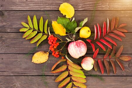 Flat lay view of autumn leaves and and fruit on brown wooden background. Apples, pears and Rowan on the table