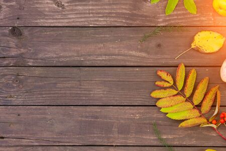 Autumn background with leaves and copy space for text