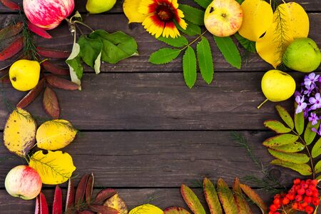 Beautiful frame of colorful autumn leaves, fruits and flowers. copy space Фото со стока
