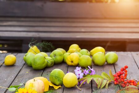Ripe pears on a wooden table with autumn leaves and Rowan berries on the table Stock Photo
