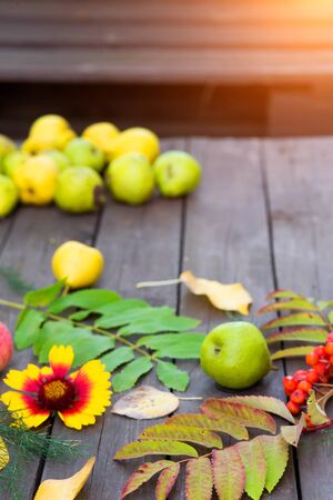 Autumn harvest. Closeup of colorful leaves, Rowan berries, apples with pears on a wooden table in the garden Stok Fotoğraf - 129810547