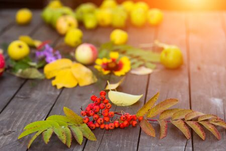 Close up autumn table with harvest. Yellow, red leaves with fruit Imagens
