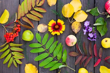 Flat lay view of autumn leaves, Rowan berries, fruits and flowers on the table in the garden Stok Fotoğraf - 129810601
