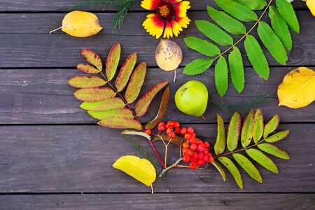 Flat lay view of autumn leaves, Rowan berries, fruits and flowers on the table in the garden
