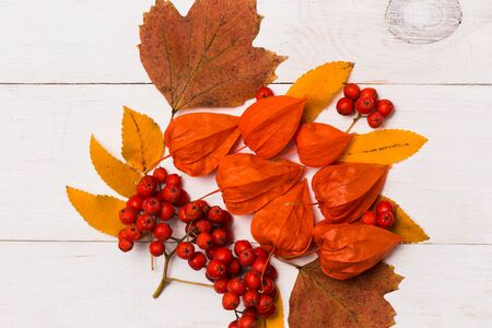 Closeup Autumn and festive composition of leaves, physalis, Rowan on a white wooden background. Autumn, Halloween concepts Imagens