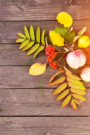 Beautiful autumn background with leaves and fruits for text