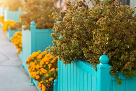 The beautiful design of the Park, the streets with flowers and shrubs. Closeup background for copy space Stockfoto