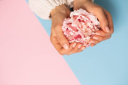 Closeup beautiful flower peony rose on female hands in white sweater on blue and pink background with copy space. Care, Spa, quality professional manicure, beauty and fashion concepts.