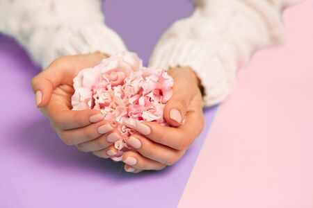 Beautiful pink peonies roses on female hands on two tone purple and pink background, closeup. Care, Spa, quality professional manicure, beauty and fashion concepts