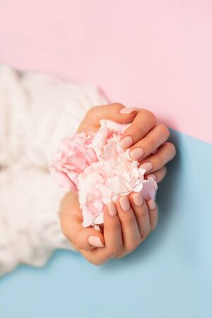Care, Spa, quality professional manicure, beauty and fashion concepts. Closeup beautiful flower peony rose on female hands in white sweater on blue and pink background with copy space. 写真素材