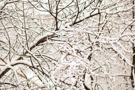 Beautiful white winter trees on snow. Closeup 写真素材