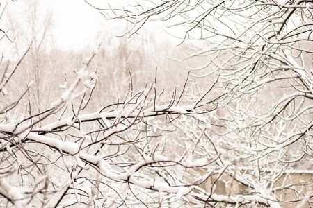 Beautiful winter background for copy space. white trees on snow. 写真素材