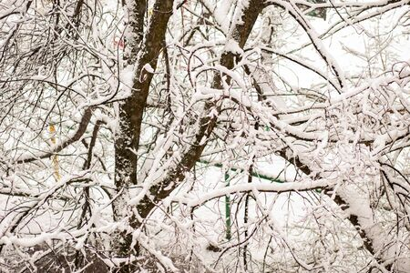 Beautiful winter tree branches covered with snow in nature