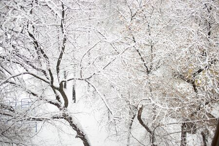 Beautiful forest with white snow covered trees in winter, the view from the top 写真素材