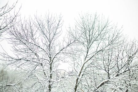 Beautiful forest with white snow covered trees in winter