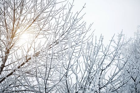 Beautiful background for copy space. The long branches of the trees were covered with white snow in the sun 写真素材