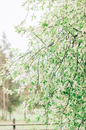 Closeup vertical photo of flowering gardens in nature 写真素材