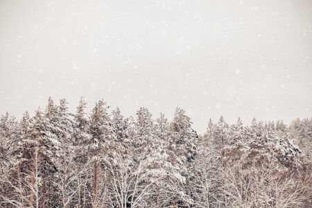 Beautiful winter background with snow for copy space Archivio Fotografico - 138099529