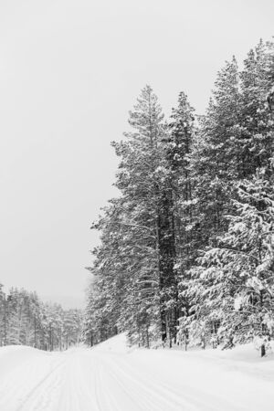 Black and white photo of winter nature, road while traveling Archivio Fotografico - 138104426