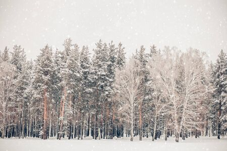 Beautiful winter nature, trees, white snow, snowfall Archivio Fotografico - 138104544