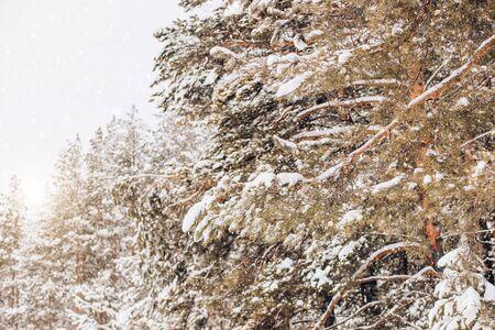 Beautiful winter, snow, green trees in nature Archivio Fotografico - 138104711