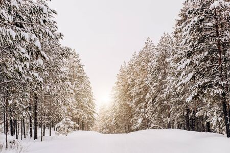 Beautiful winter landscape with tall green trees, pines, snow and road in the forest while traveling. Archivio Fotografico - 138110530