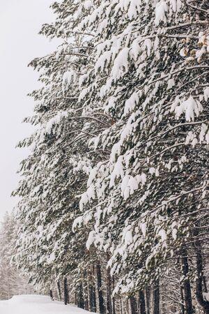 Beautiful winter, snow, green trees in nature Archivio Fotografico - 138107633