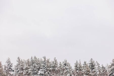 Beautiful winter background with tree tops covered with white snow and sky for copy space Archivio Fotografico - 138113484