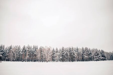 Beautiful grey landscape in winter, copy space Archivio Fotografico - 138114052