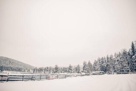 Beautiful winter landscape, trees and snow in nature Archivio Fotografico - 138115454