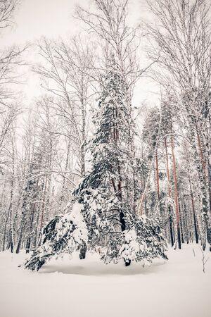 Beautiful winter landscape, trees and snow in nature Archivio Fotografico - 138132604