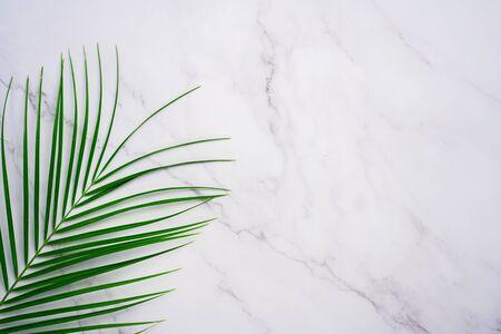 Frame of tropical palm leaf